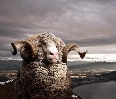Geen last meer van stink en zweetvoeten dankzij merino wol